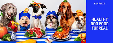 Online Pet Food Store India